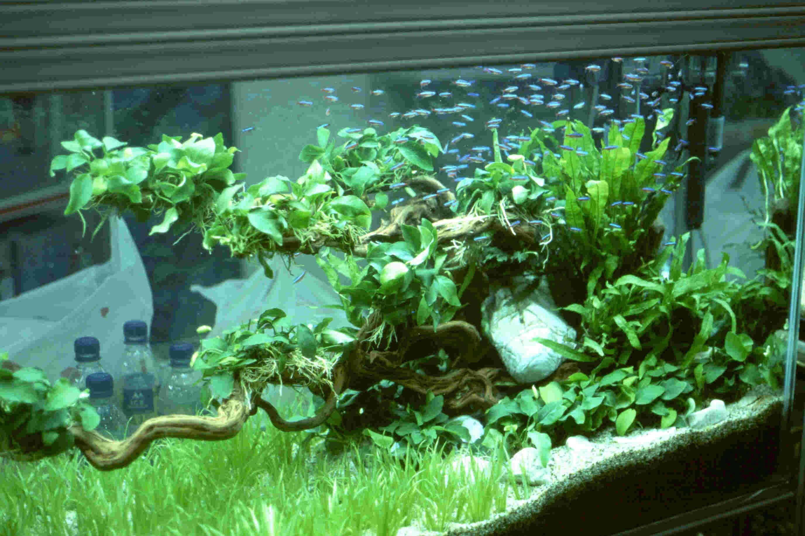 Live Plant Aquarium Aquatic Gardens