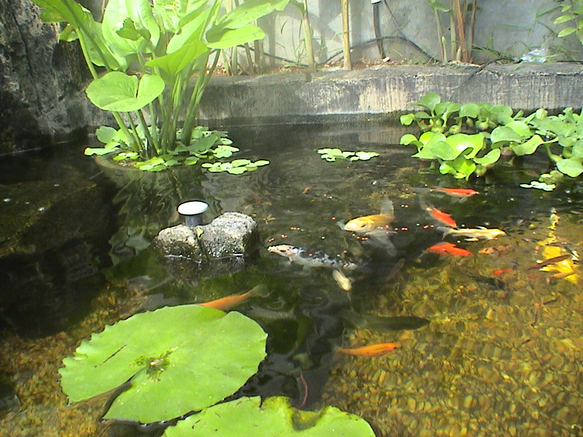 Federation of british aquatic societies for Small fish pond