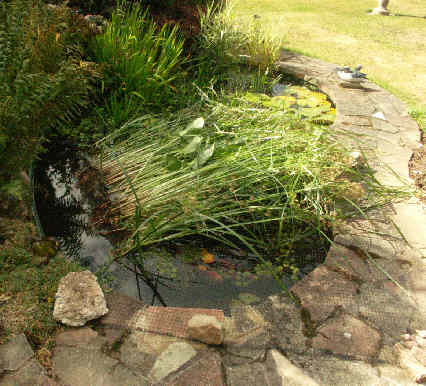 Pond plants for Marginal pond plants